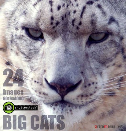 Amazing SS - Big Cats