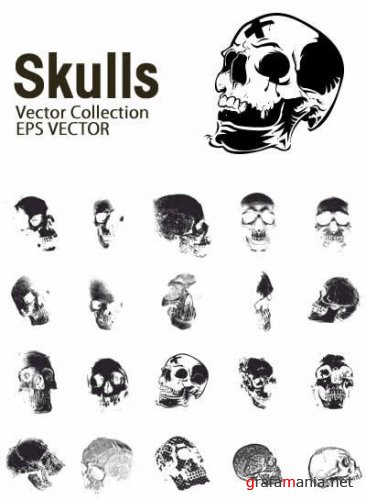 Skulls Vector Collection