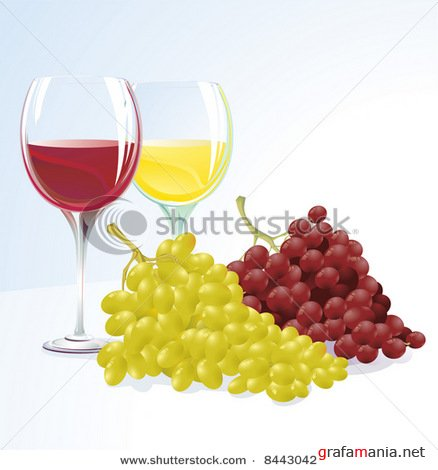 Vines and grapes. Vector
