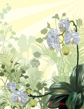Tropical Orchid Background