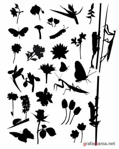 Plants and insects vector