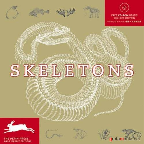 Pepin Press - Skeletons