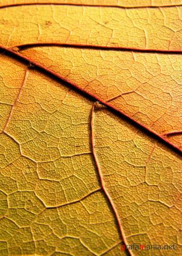 �������� - Dried and Pressed Leaves