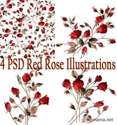 PSD Red Rose Illustrations