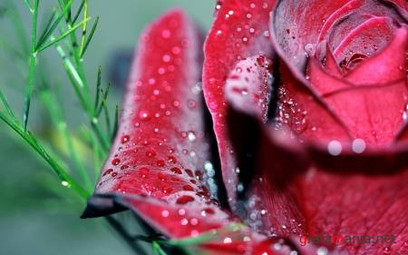 Flowers WideScreen Wallpapers #1