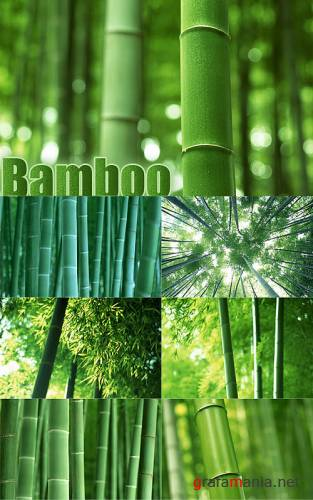 Stock Photo - Bamboo