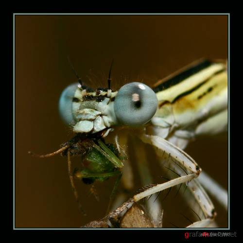 Allon Kira. #2_Monsters in the world of insects.