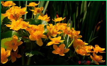 Flowers WideScreen Wallpapers #5