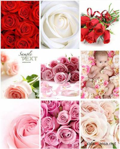 UHQ Stock Photos: Roses And Baby