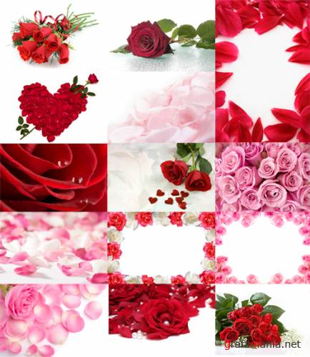 Rose backgrounds