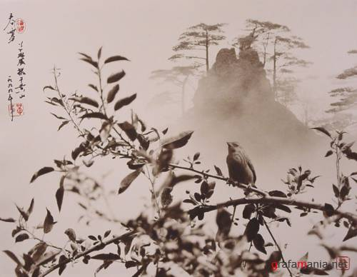 Фотограф  Don Hong-Oai