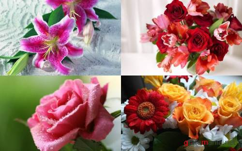 Flowers WideScreen Wallpapers #6