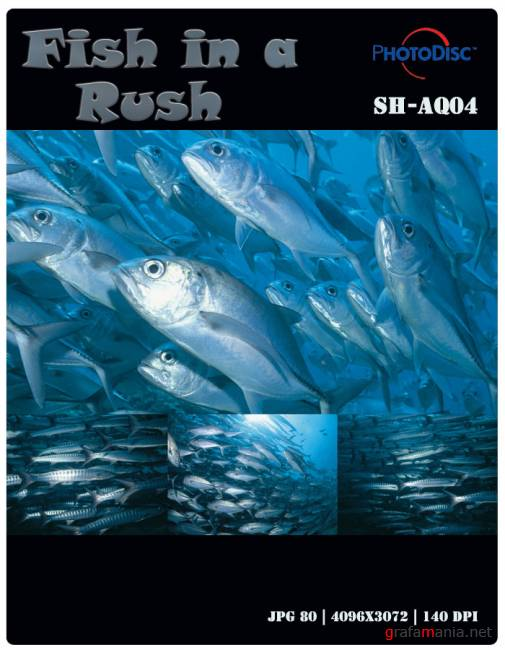 Fish in a Rush