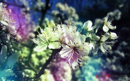 Flowers WideScreen Wallpapers #7