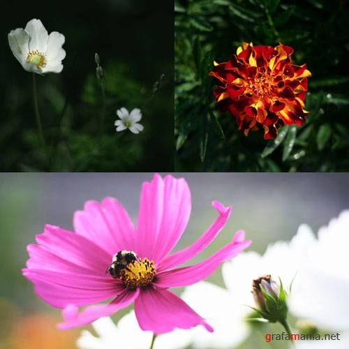 ����������� - Flora Package