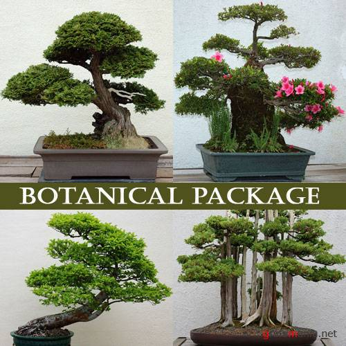 ����������� - Botanical Package