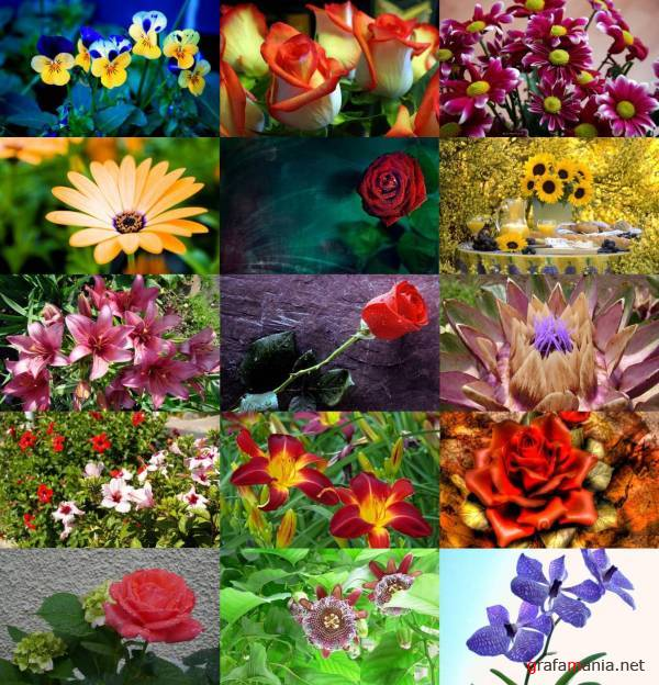 Flowers WideScreen Wallpapers #8