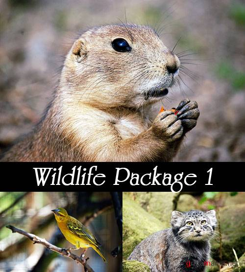 Фотоклипарт - Wildlife Package 1