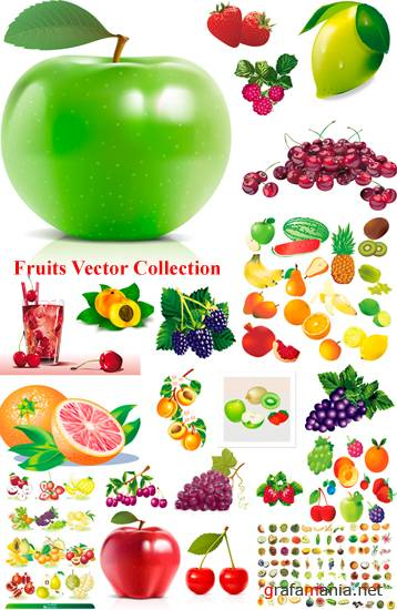 Fruit Vector Collection