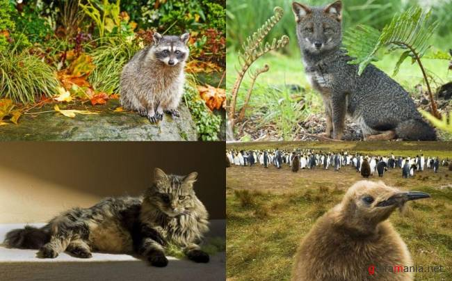 Animals WideScreen Wallpapers #11