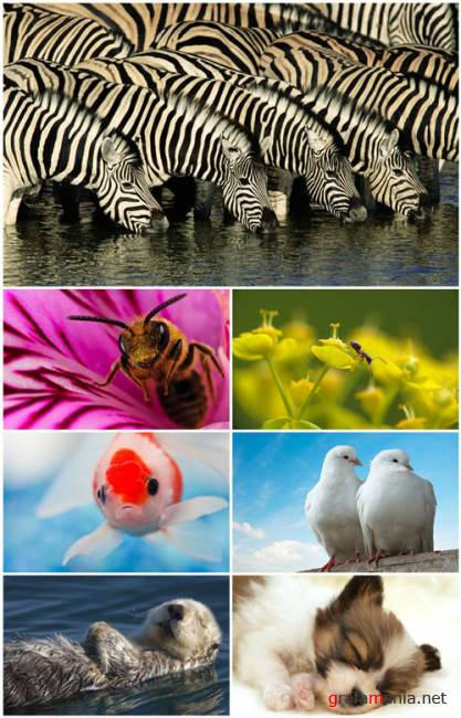 Animals WideScreen