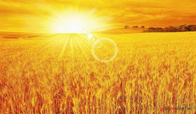 Dawn �bove the wheat field PSD
