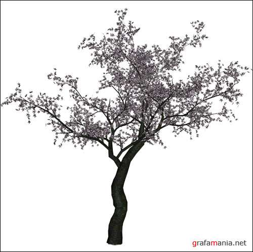 PNG ������� - Cherry Tree