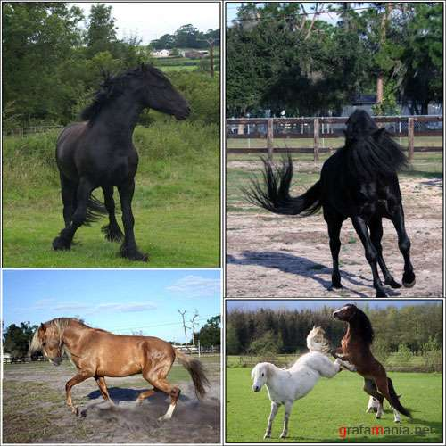 ����������� - �orse pack-2