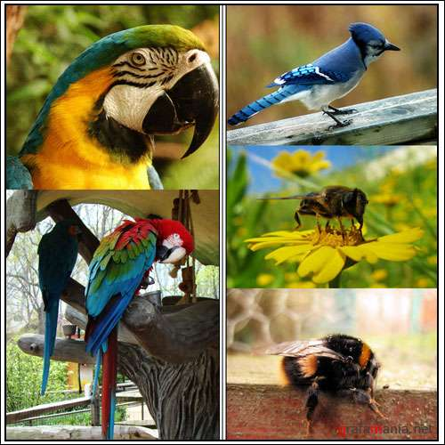 ����������� - Birds and insects