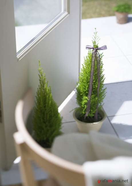 Interior - Greenery And Herbs