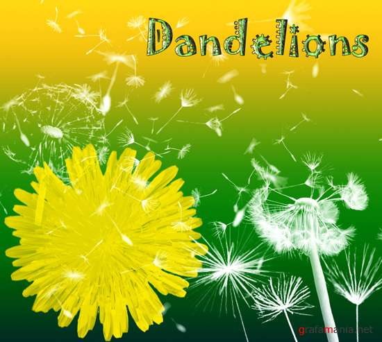 Dandelions Brushes for Photoshop