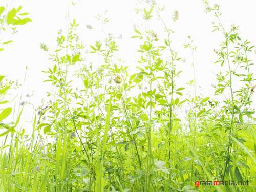 Green Garden and Field Wallpapers