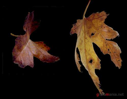 Фотоклипарт - Fall Leaves pack