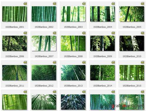 Bamboo Wallpapers
