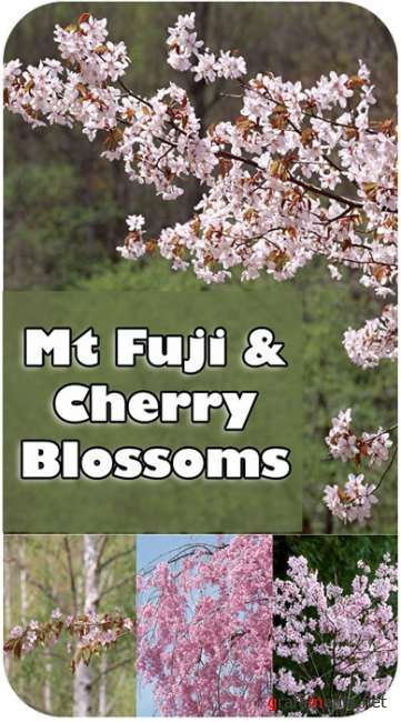 Stock Photos - Mt Fuji & Cherry Blossoms