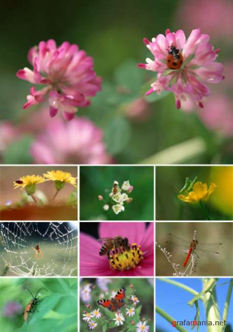 ��������� � �������   Insect in nature