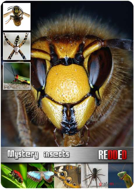 Mystery insects - HQ clipart foto