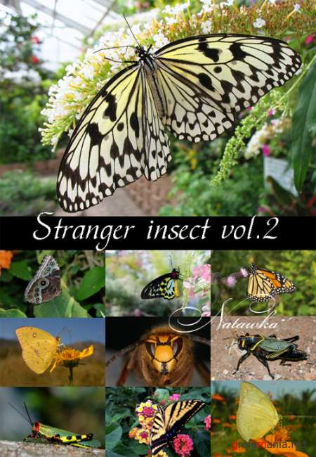 Intellectchaos Images Collection - STRANGER INSECT vol.02