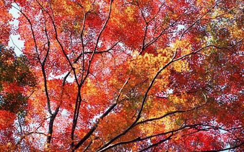 Beautiful Autumn Trees Wallpapers