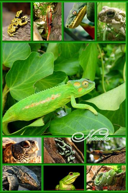 Intellectchaos Images Collection - COOLNESS REPTILE vol.02