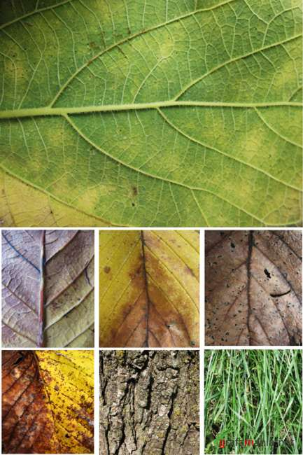 25 High Resolution Plant Textures