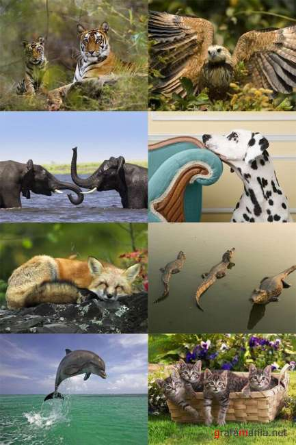 40 Beautiful Animals Wallpapers