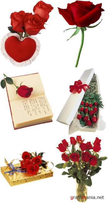 Red roses PNG