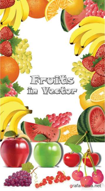 Fruit in vector