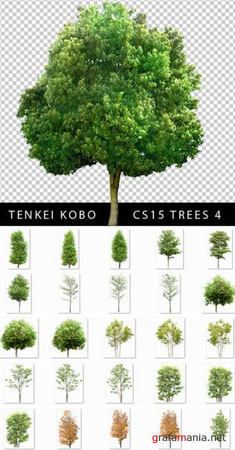 Tenkei Kobo - CS15 - Trees 4