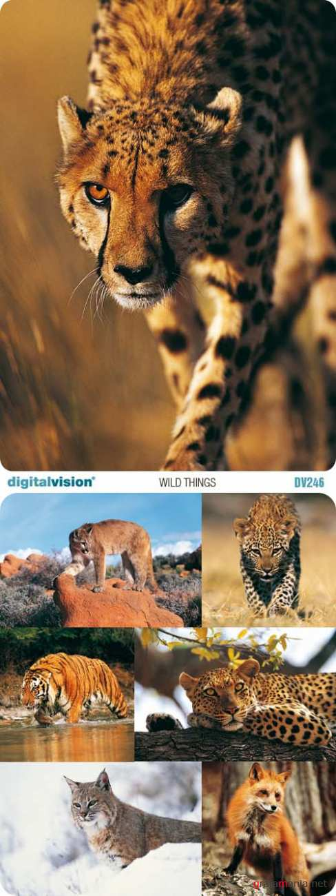 Digital Vision | DV246 | Wild Things