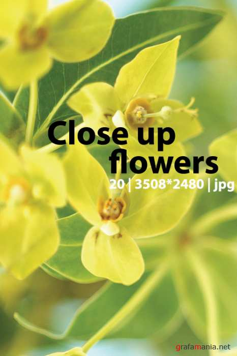 "Flowers close up photo clipart | ����������� "" ����� ������� ������"""