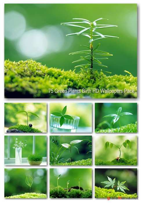 75 Green Plants Birth HD Wallpapers