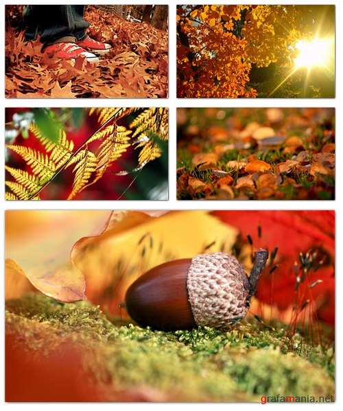 Autumn Wallpapers (part 3)