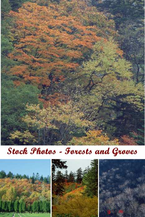 Stock Photos - Forests and Groves